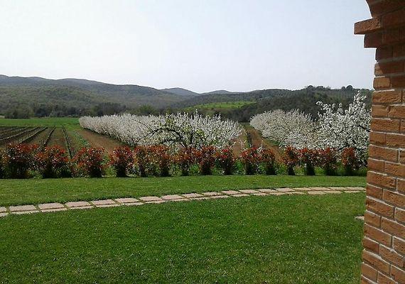 Il giardino dei ciliegi cura nuova